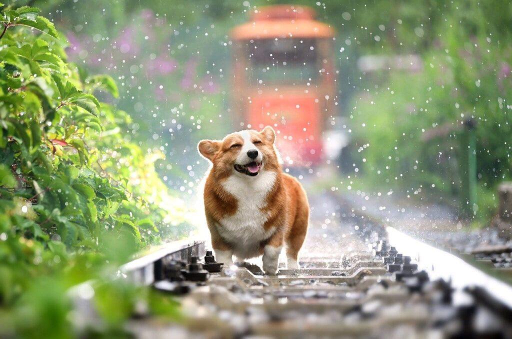 線路の上にいる犬